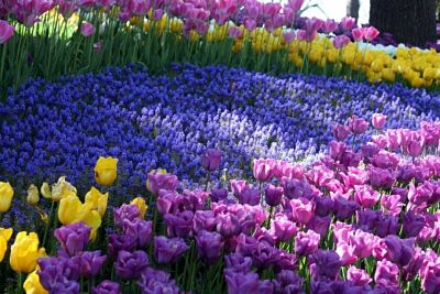 Sortie aux tulipes !